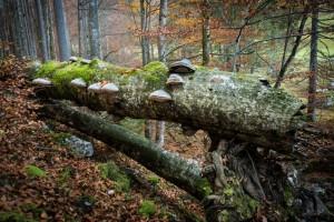 Jak se dělá prales -  dokumentární film (Rakousko) @ Společenský dům Lávka | Mladá Boleslav | Středočeský kraj | Česká republika
