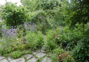 Netradiční ovoce v přírodní zahradě - Klub zdraví @ Společenský dům Lávka